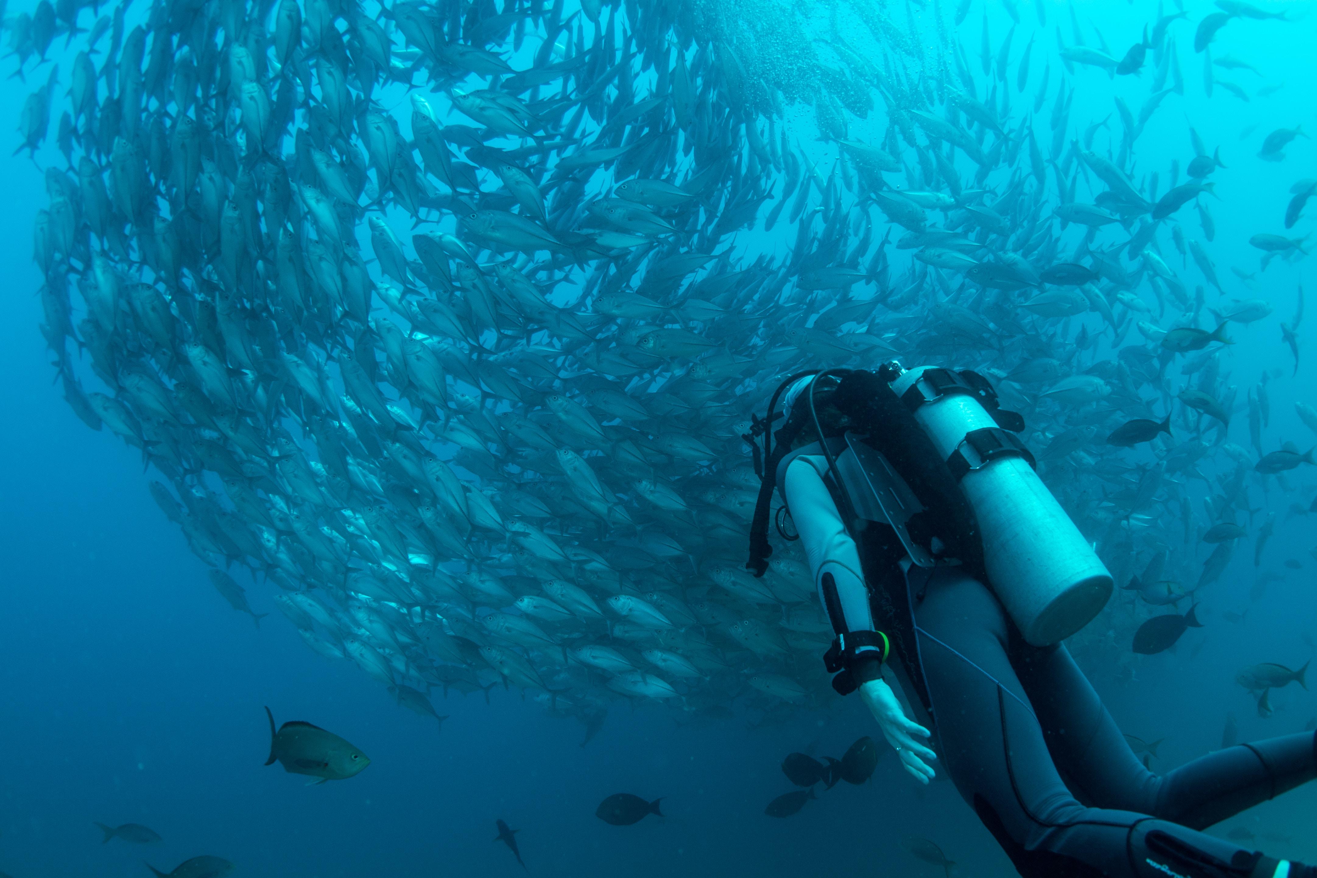 タオ島 ダイビング